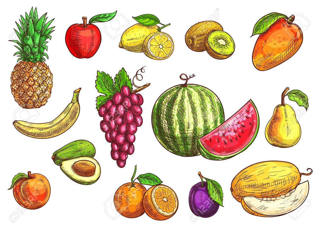 Frutas Conjunto Boceto Dibujado A Mano Ilustracion De Vector