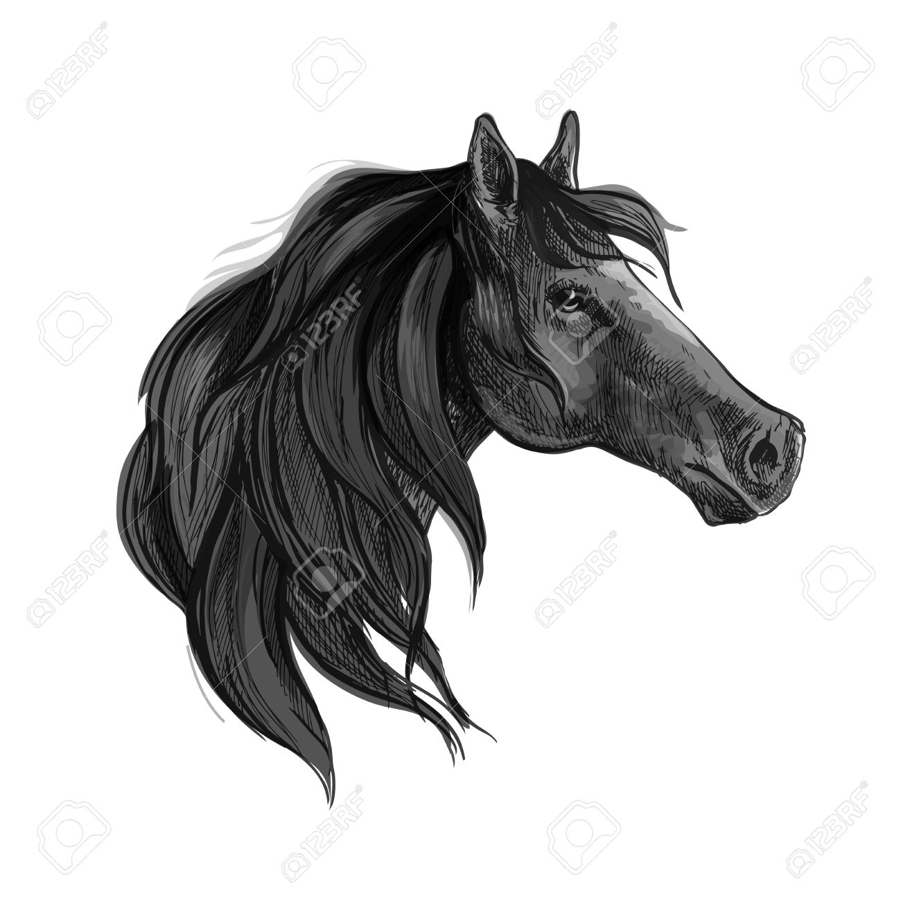 Black Horse Sketch Of Purebred Arabian Mare With Silky Mane Royalty Free Cliparts Vectors And Stock Illustration Image 61439787