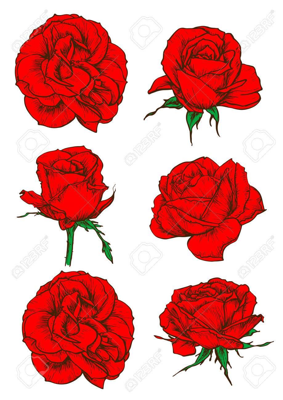 Vettoriale Icone Rosse Rosa Con Fiori Che Sbocciano E Boccioli Di