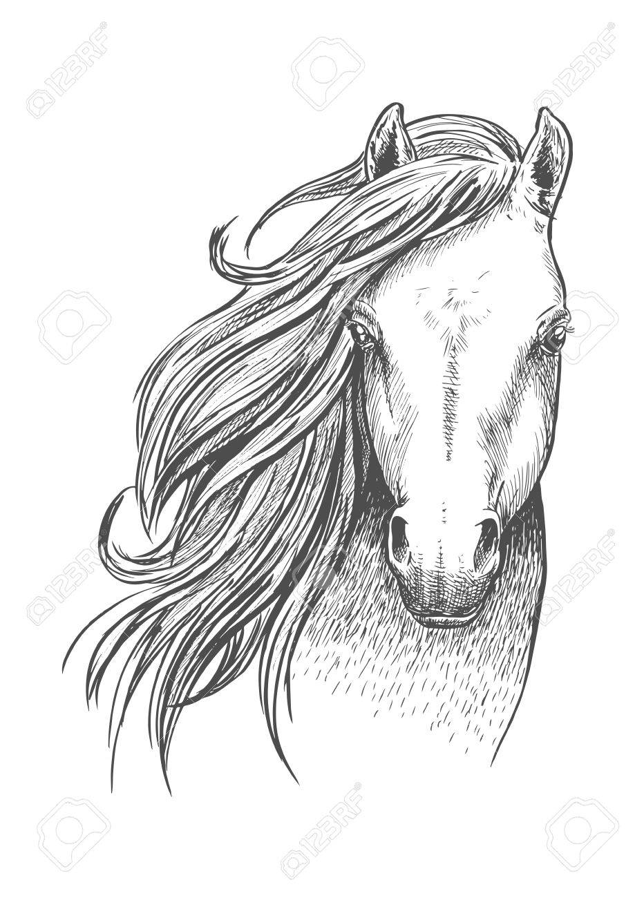 Beautiful Wild Horse Sketch Icon Head And Shoulders Portrait Royalty Free Cliparts Vectors And Stock Illustration Image 61615190