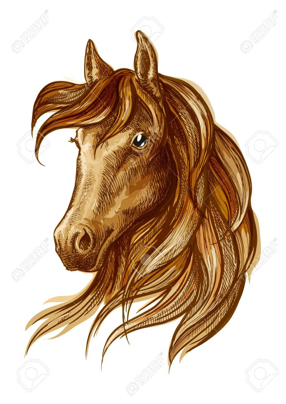Brown Stallion Horse Head Sketch With Purebred Arabian Racehorse Royalty Free Cliparts Vectors And Stock Illustration Image 61615260