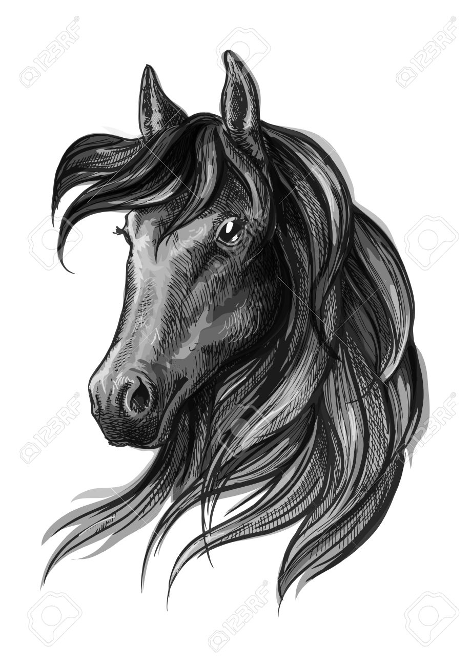 Horse Head Pencil Sketch Portrait Black Mustang With Mane On Royalty Free Cliparts Vectors And Stock Illustration Image 69205934