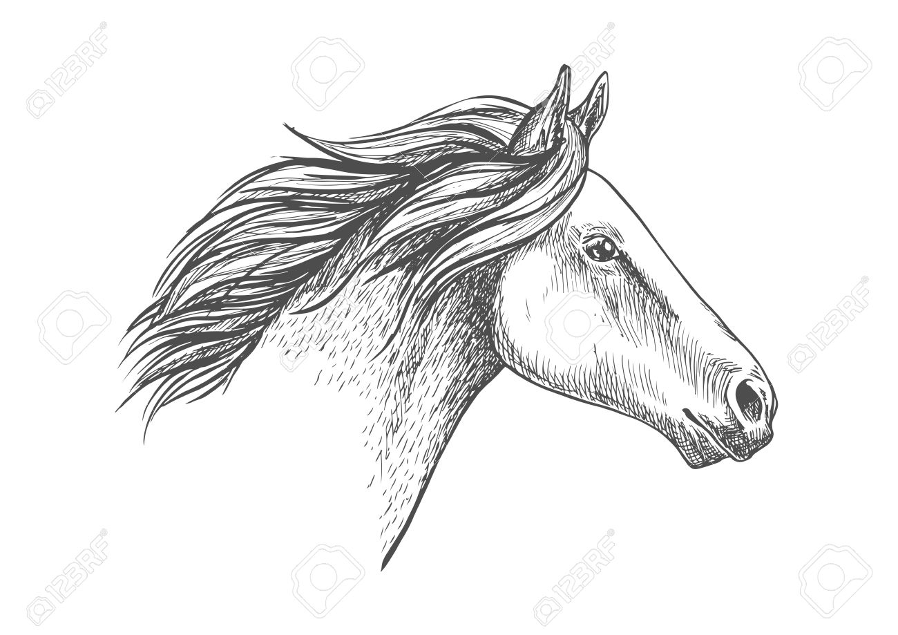 White Horse Pencil Sketch Portrait Running Horse With Waving Royalty Free Cliparts Vectors And Stock Illustration Image 61549089