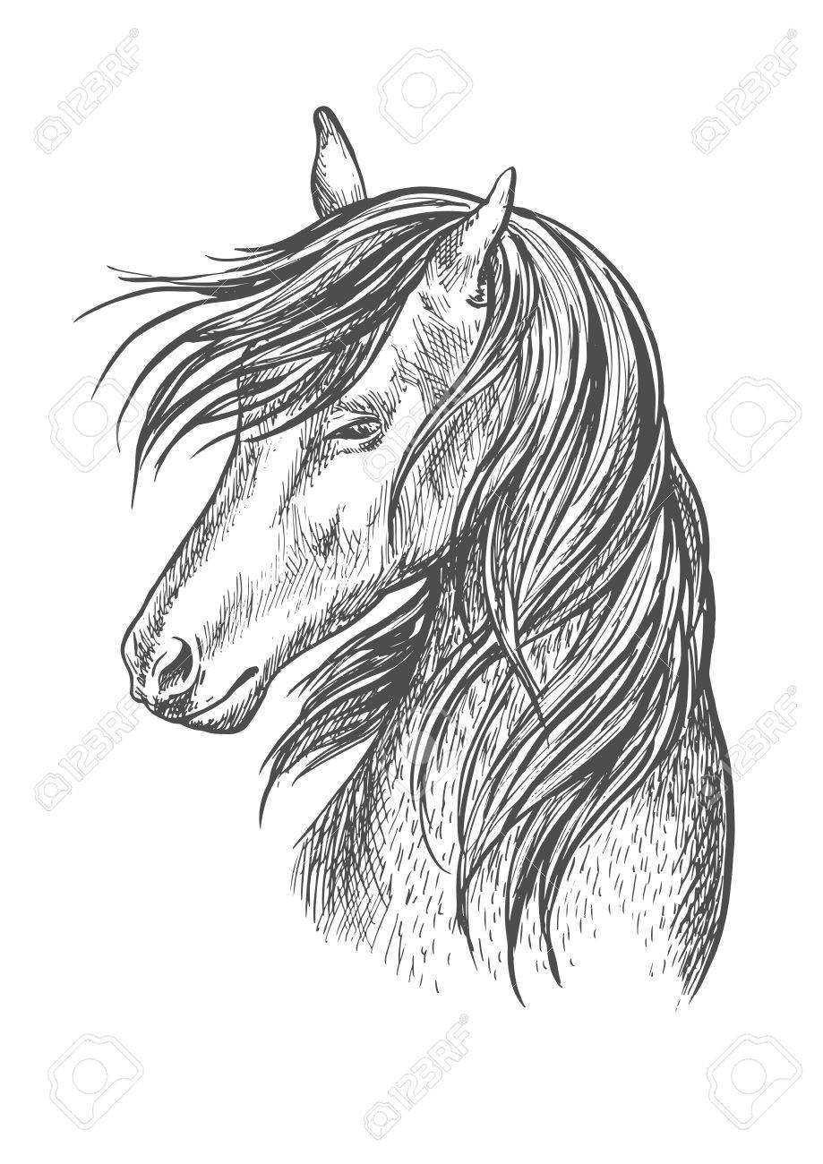 Horse Pencil Sketch Portrait Beautiful Stallion Or Mare With Royalty Free Cliparts Vectors And Stock Illustration Image 61549373