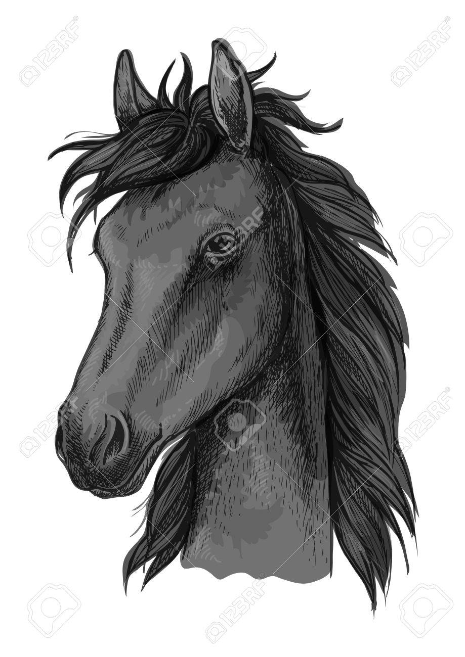 Black Arabian Horse Sketch Of Purebred Stallion With Fluffy Forelock Royalty Free Cliparts Vectors And Stock Illustration Image 62641337
