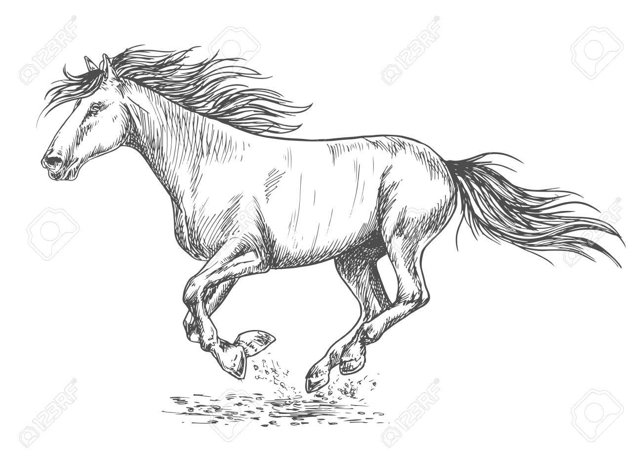 Running horse pencil sketch portrait white mustang stallion rushing with gallop gait stock vector