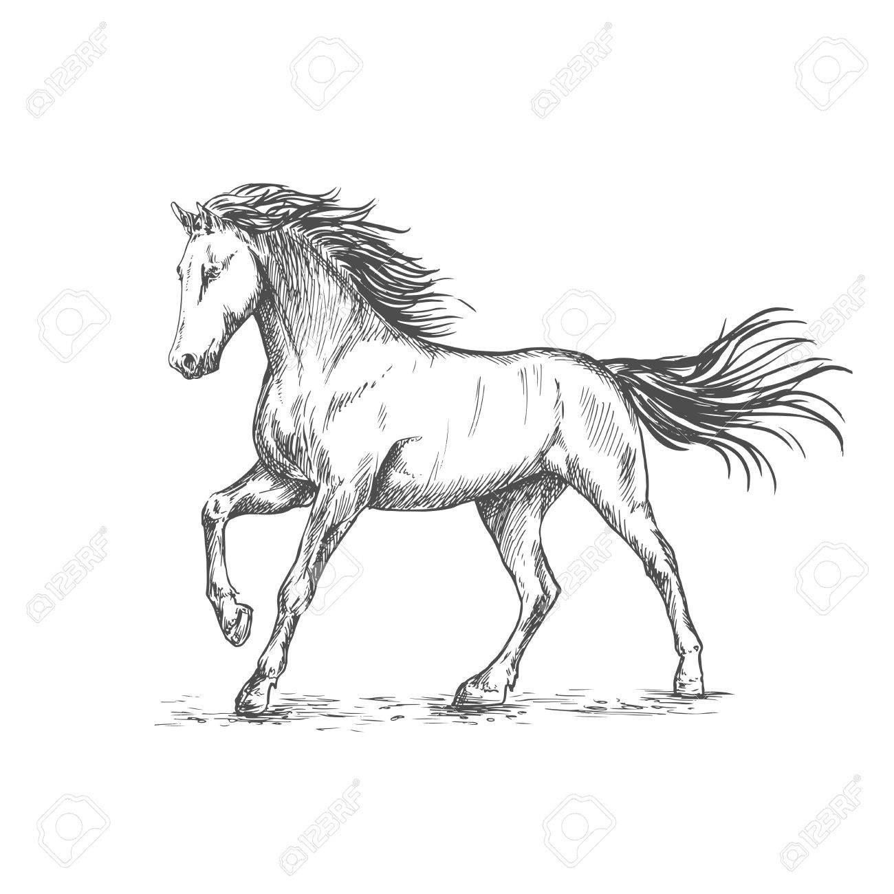 Vector white horse with stamping hoof pencil sketch portrait prancing mustang with mane and tail waving by wind