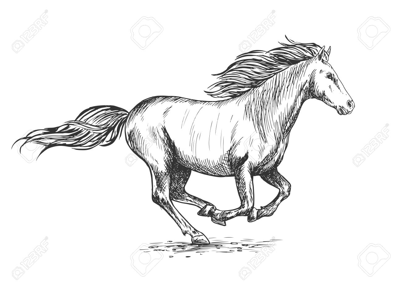 Running Gallop White Horse Sketch Portrait Vector Mustang Stallion Royalty Free Cliparts Vectors And Stock Illustration Image 64877492