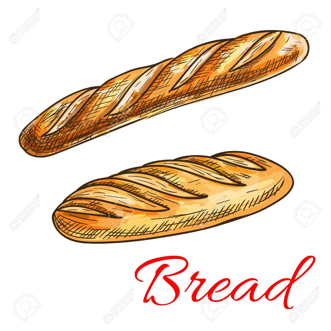 Sketch Of Wheat Bread With Fresh Crispy French Baguette And Long Loaf Bakery Shop
