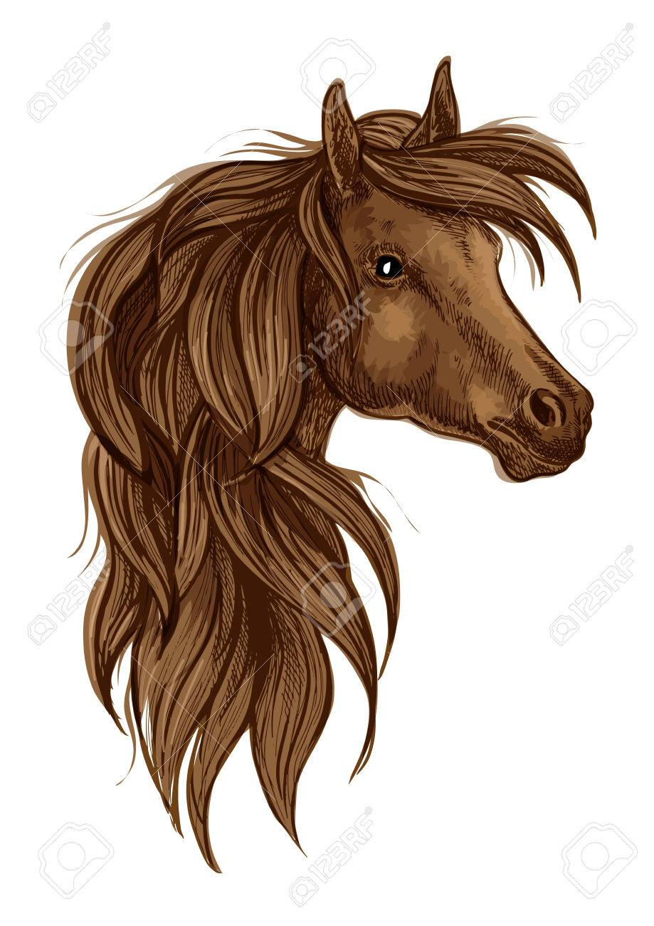 Arabian Horse Head Sketch Brown Stallion Horse Of Arabian Breed Royalty Free Cliparts Vectors And Stock Illustration Image 64253772