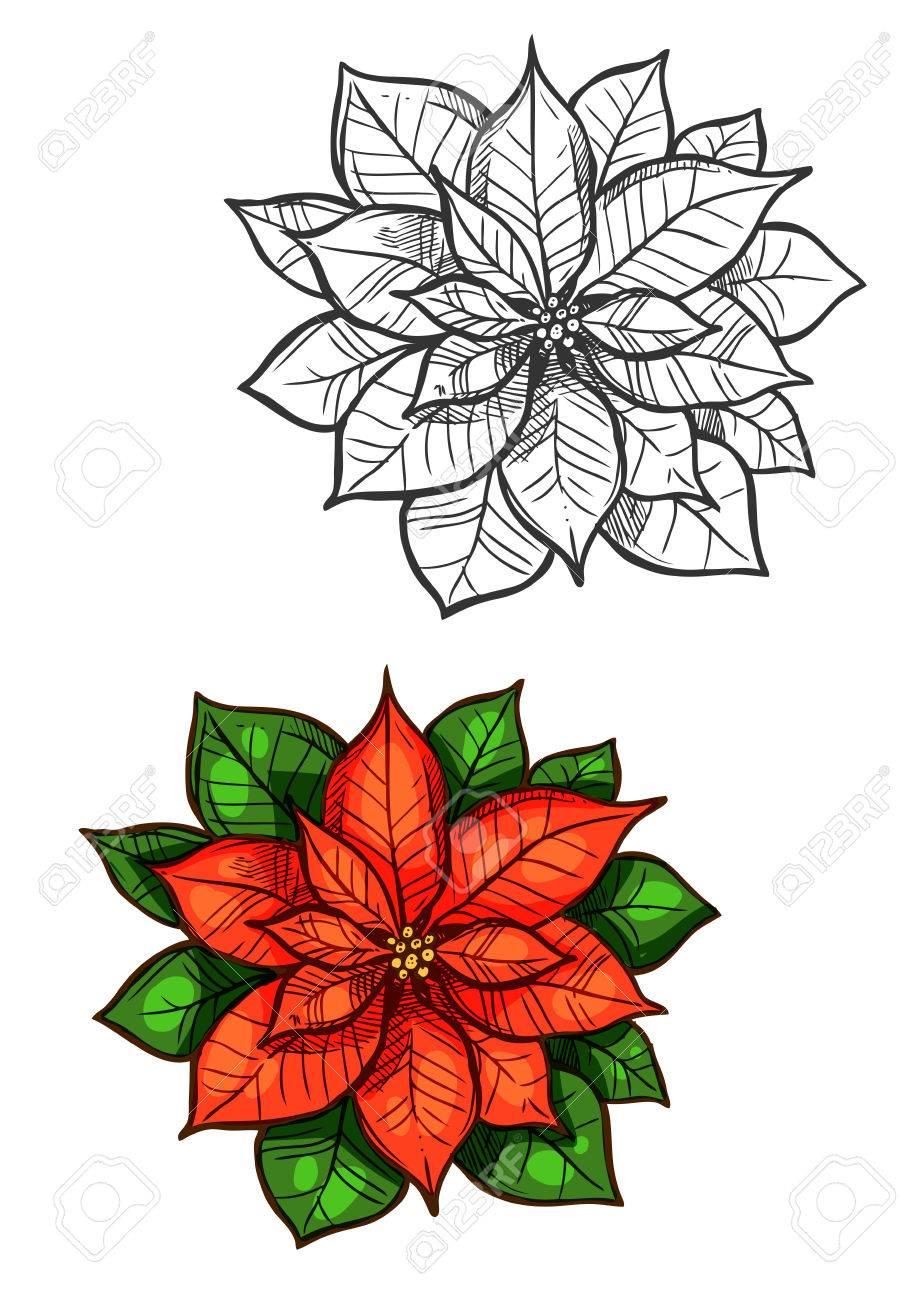 Flor De La Estrella De Navidad Dibujo Vectorial. Decoración Del Año ...