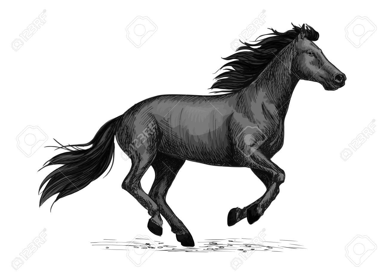 Black Horse Runs Gallop Sketch Galloping Black Stallion Horse Royalty Free Cliparts Vectors And Stock Illustration Image 69806743
