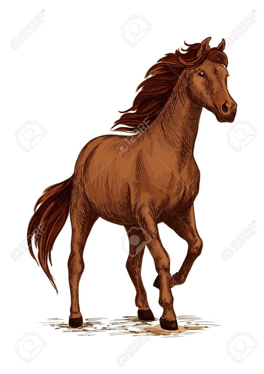 Running Horse Sketch Of Brown Arabian Stallion Galloping Purebred Royalty Free Cliparts Vectors And Stock Illustration Image 69806759