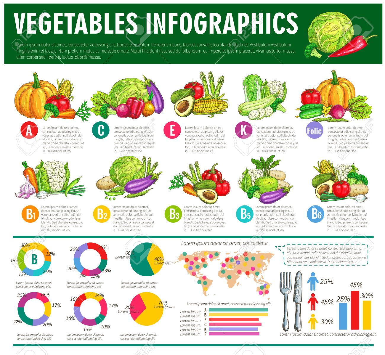 vector graph charts or diagrams of consumption, vitamines or veggies  nutrition facts  vegetarian healthy food statistics of squash, avocado and  cabbage,