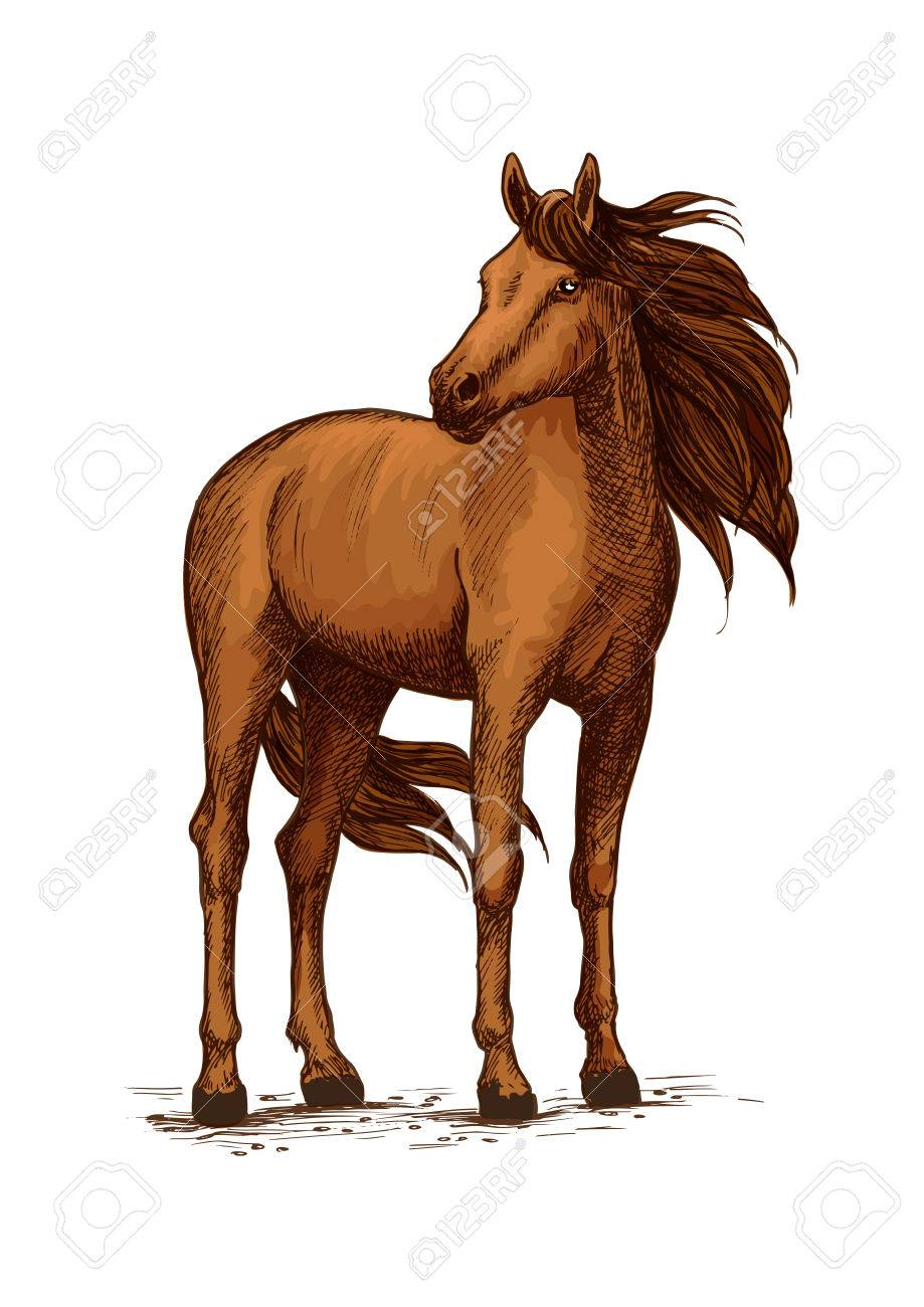 Soporte Del Semental Del Caballo O Yegua Boceto Mustang O Un Mamífero De La Castaña Doméstico Animal De Raza Pura Salvaje Con La Melena Ondulada Y
