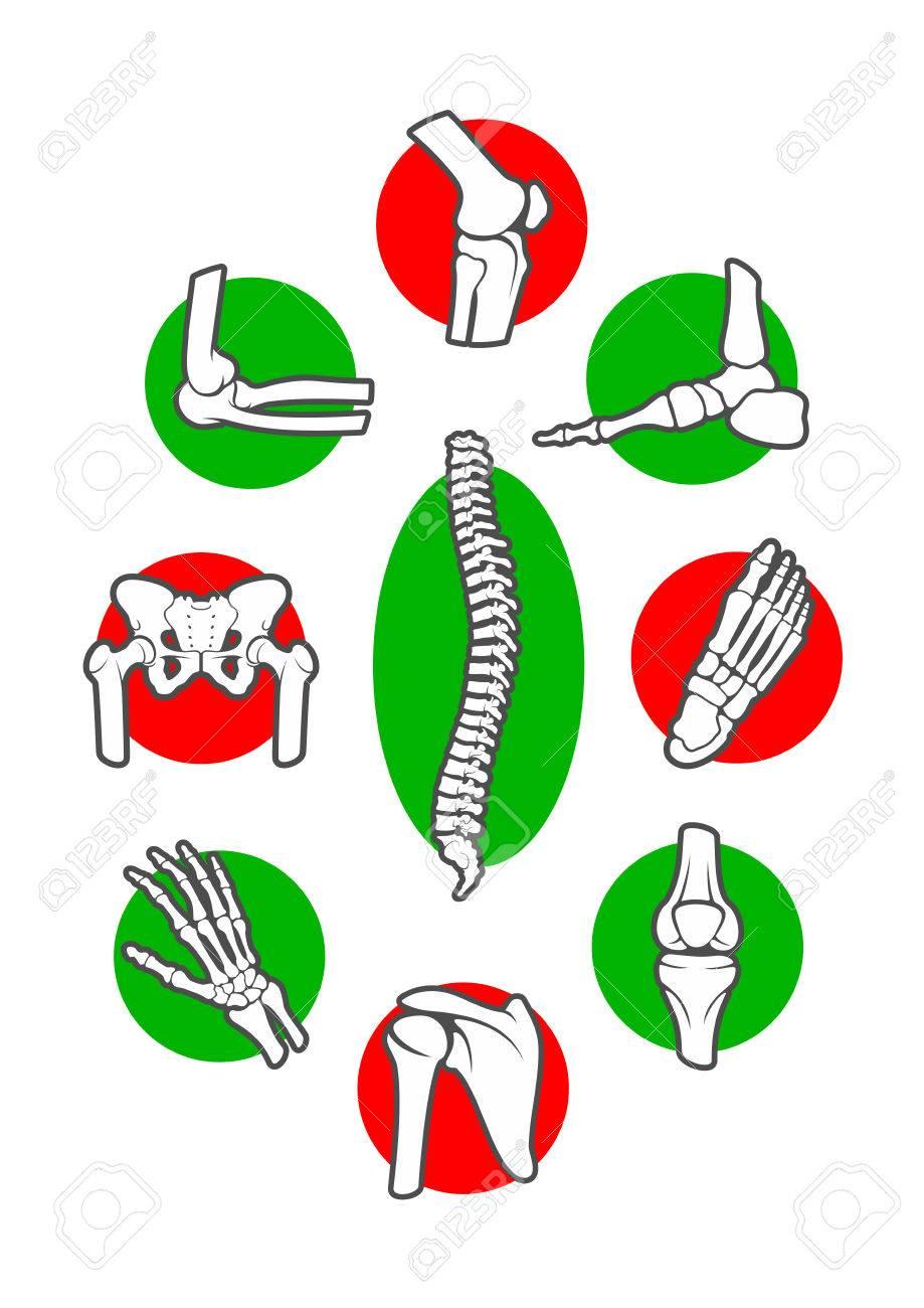 Menschliches Skelett Knochen Und Gelenke Icon-Set. Bein, Hand, Fuß ...