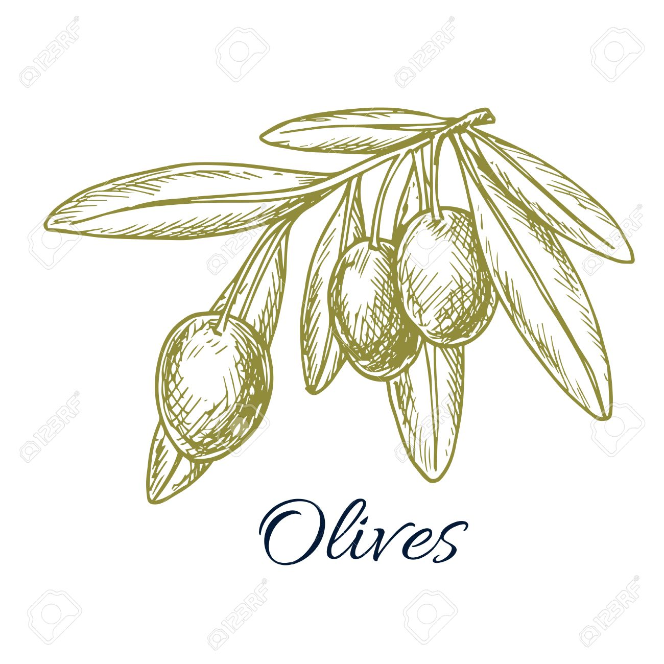 Sketch of green olives vector isolated icon of olive branch with design or symbol for olive oil label vegetarian vegetable food salad ingredient and seasoning olive tree symbol for buycottarizona Choice Image