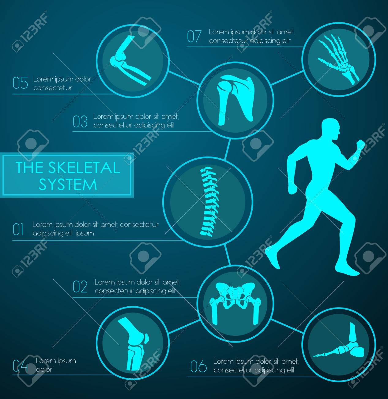 Infografía Médico Del Sistema Esquelético Humano. Gráfico De La ...