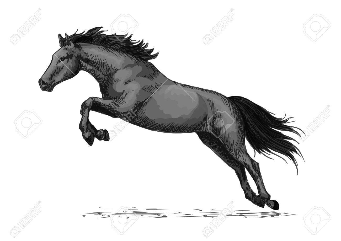 Horse Or Wild Stallion Running In Gallop And Jumping Over Royalty Free Cliparts Vectors And Stock Illustration Image 71564201
