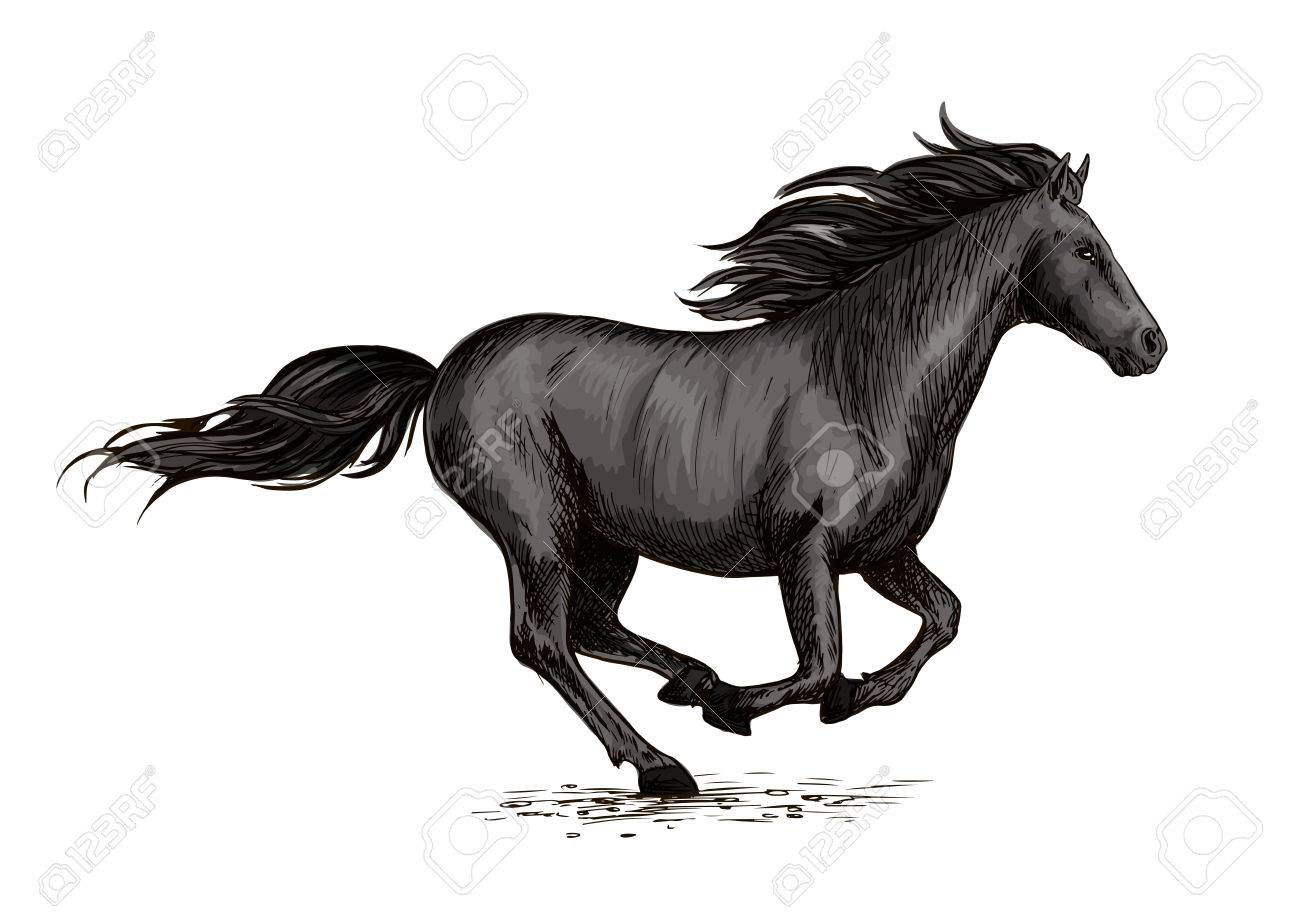 Horse Racing On Races Wild Black Racehorse Mustang Galloping Royalty Free Cliparts Vectors And Stock Illustration Image 71499852