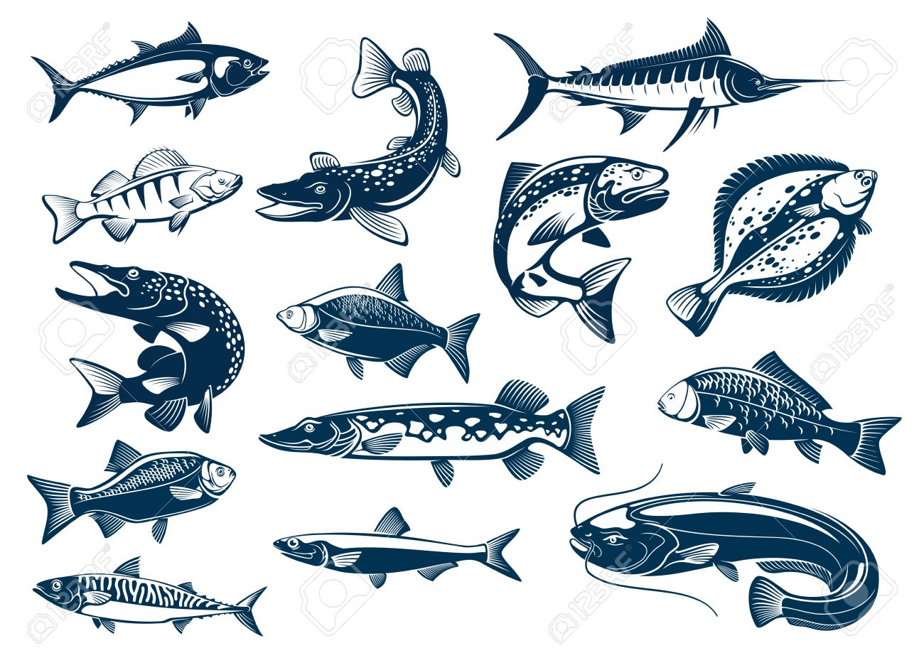 fish vector tuna pike and marlin perch bream salmon and flounder