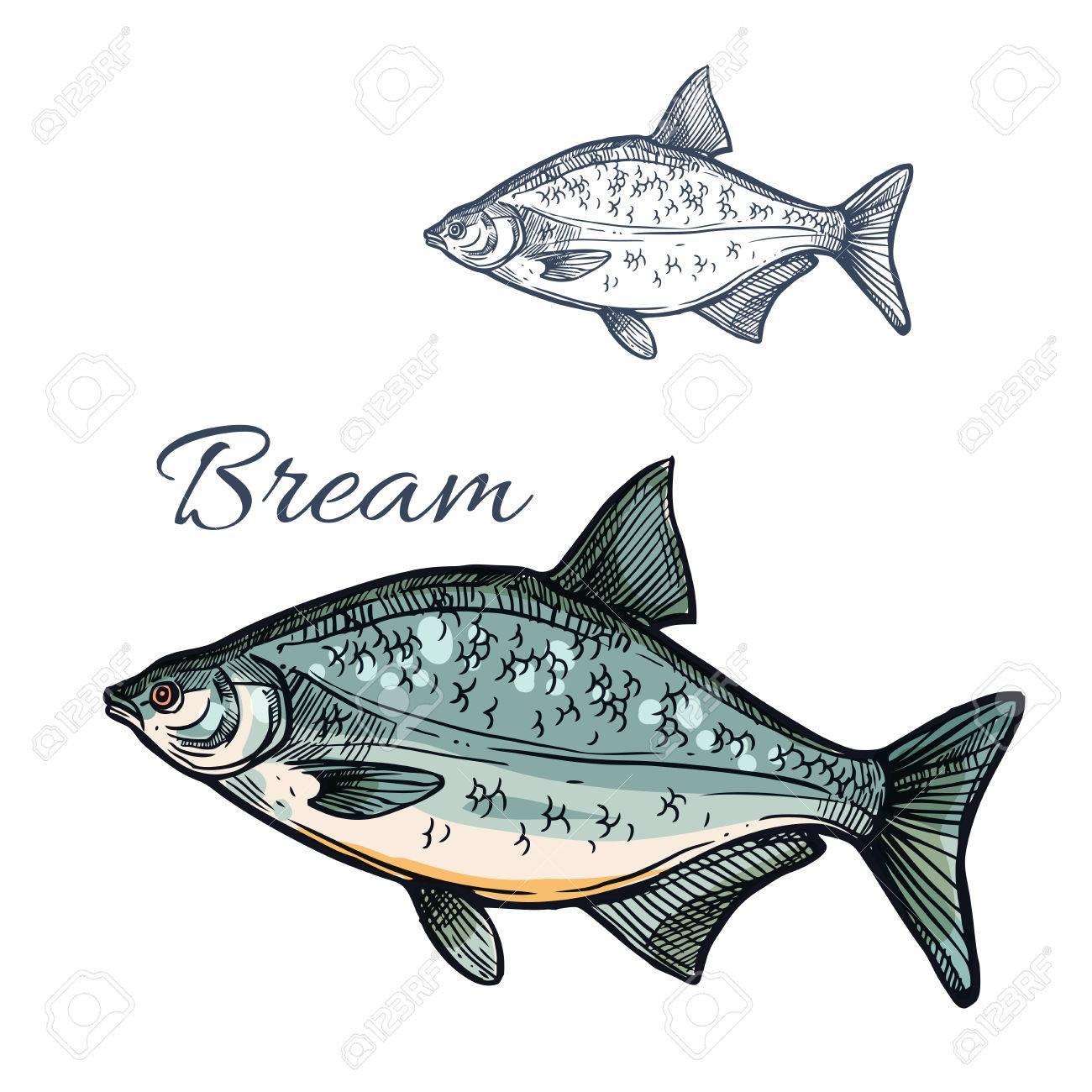 Bream sketch fish freshwater marine fish species of sea porgy or freshwater marine fish species of sea porgy or pomfret isolated symbol biocorpaavc Choice Image