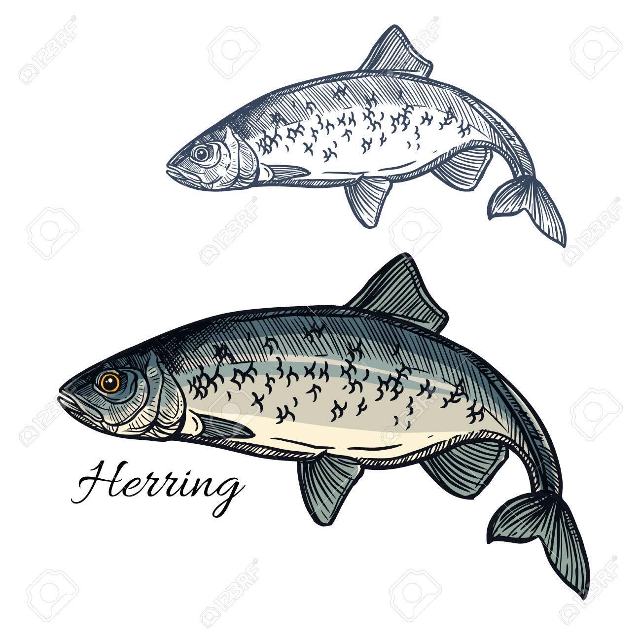 Herring Sketch Fish Icon Isolated Marine Atlantic Ocean Sardine Or