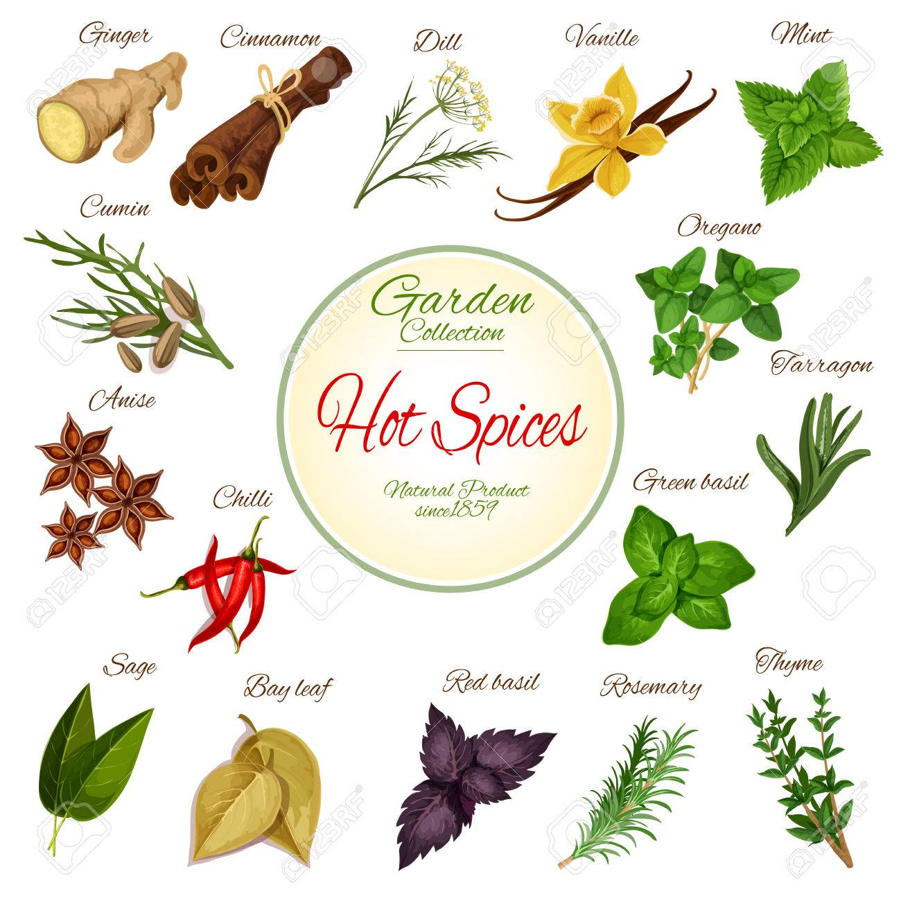 Ginger Desenho with hot spice and condiment poster with chilli pepper, ginger