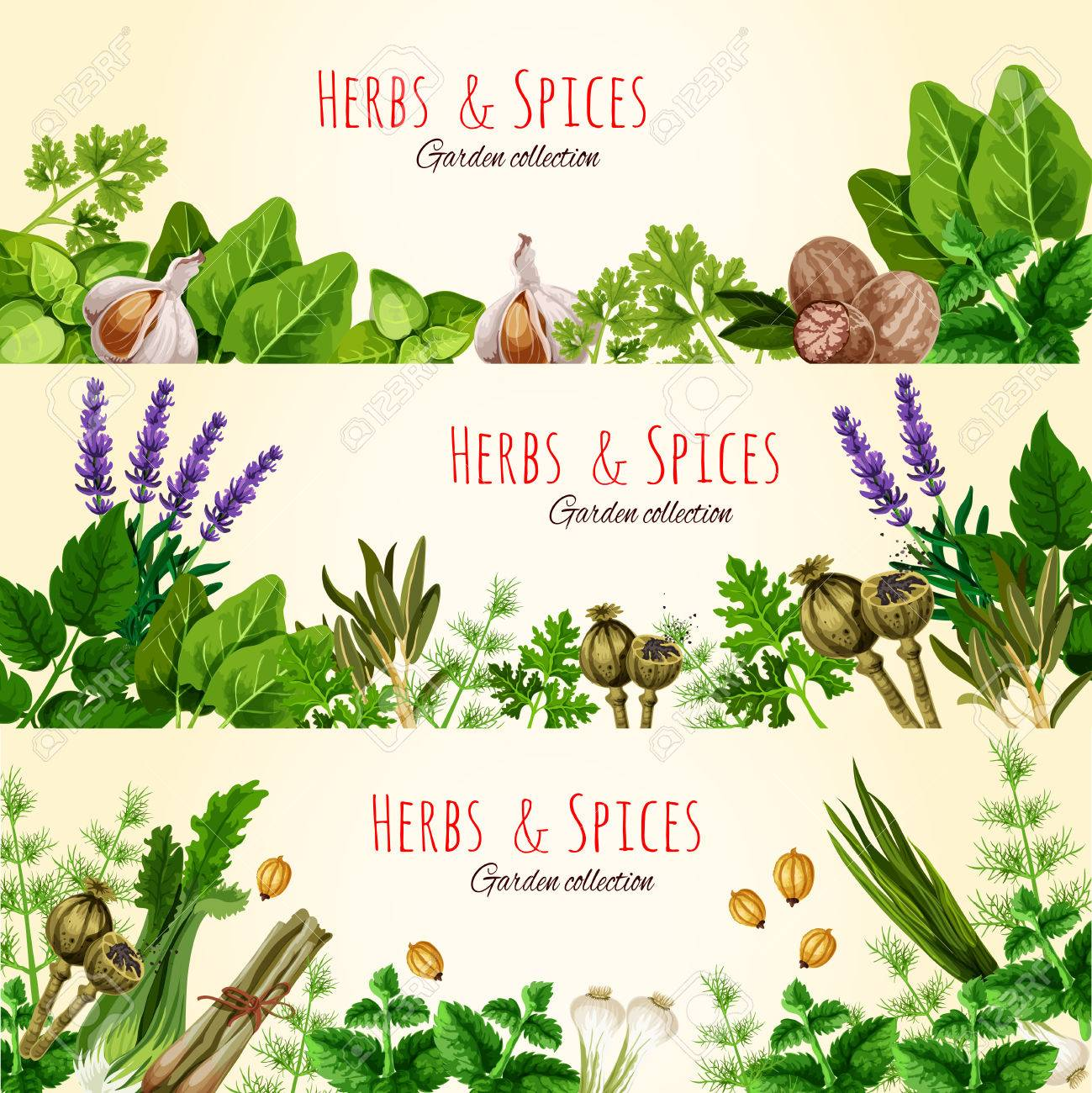 Fresh Green Herbs And Spices Banner Set Royalty Free Cliparts Vectors And Stock Illustration Image 74733788