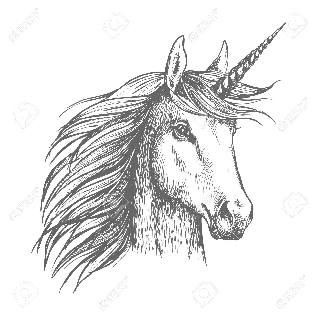 Unicorn Horse Sketch With Horn Royalty Free Cliparts Vectors And Stock Illustration Image 78078390