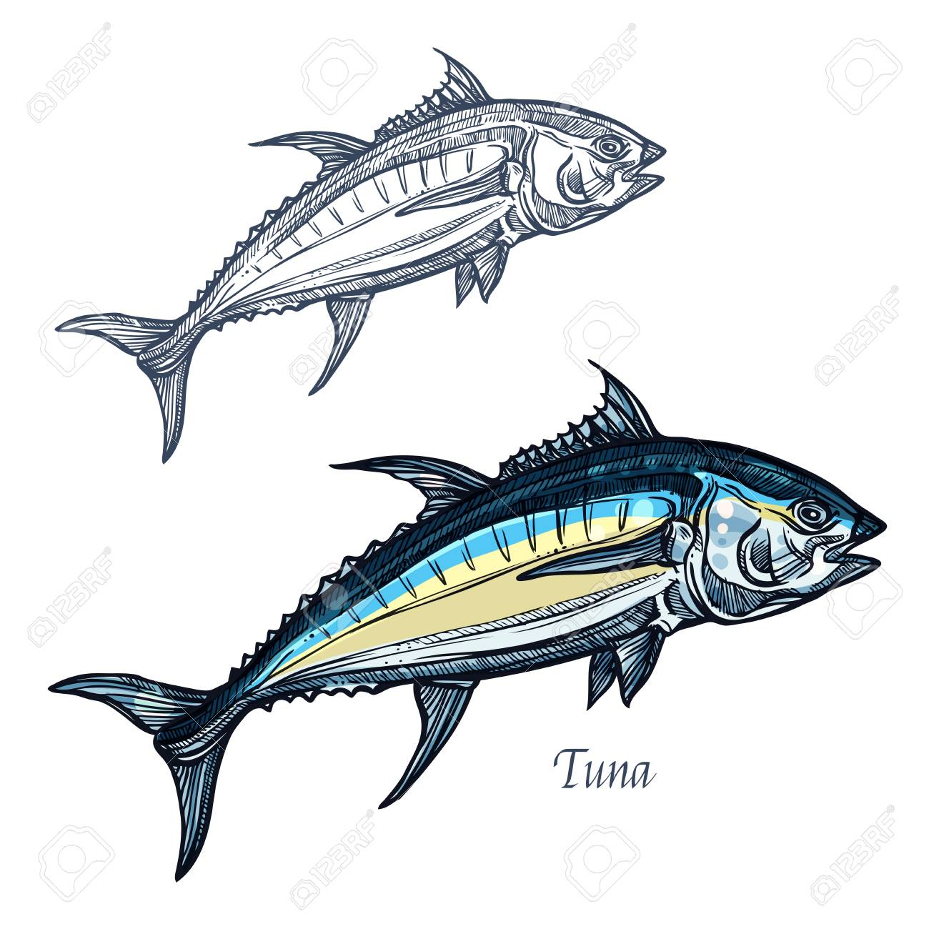 Tuna sketch vector fish icon isolated ocean mackerel fish species isolated ocean mackerel fish species isolated symbol for seafood biocorpaavc Gallery