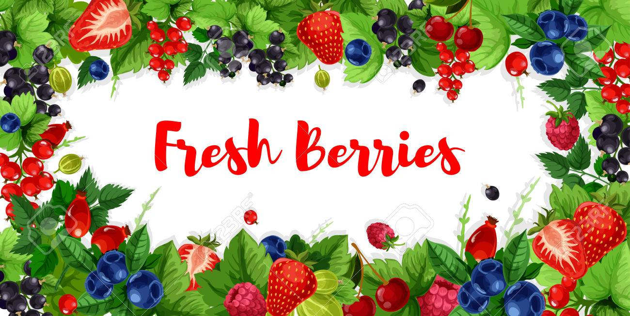 Berries banners of strawberry, raspberry or blackcurrant and red currant or cranberry. Vector design set of fresh harvest, briar of cherry and blackberry or gooseberry for organic berry market - 80570595