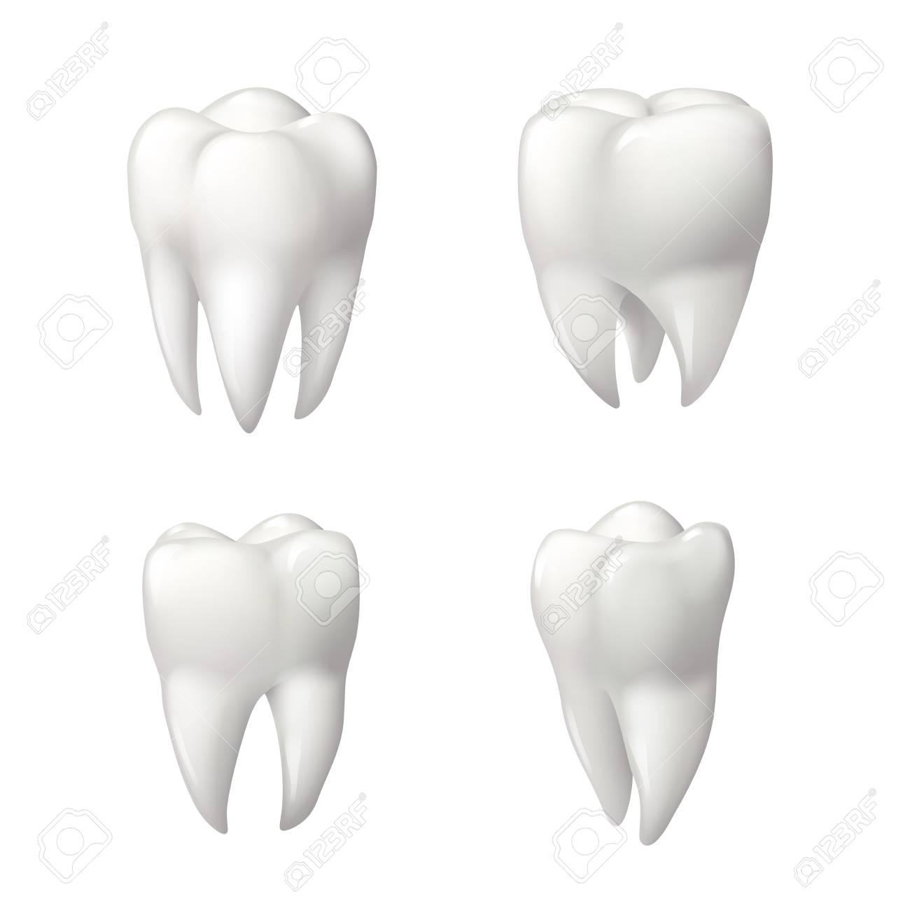 Ausgezeichnet 3d Zahnanatomie Galerie - Anatomie Von Menschlichen ...
