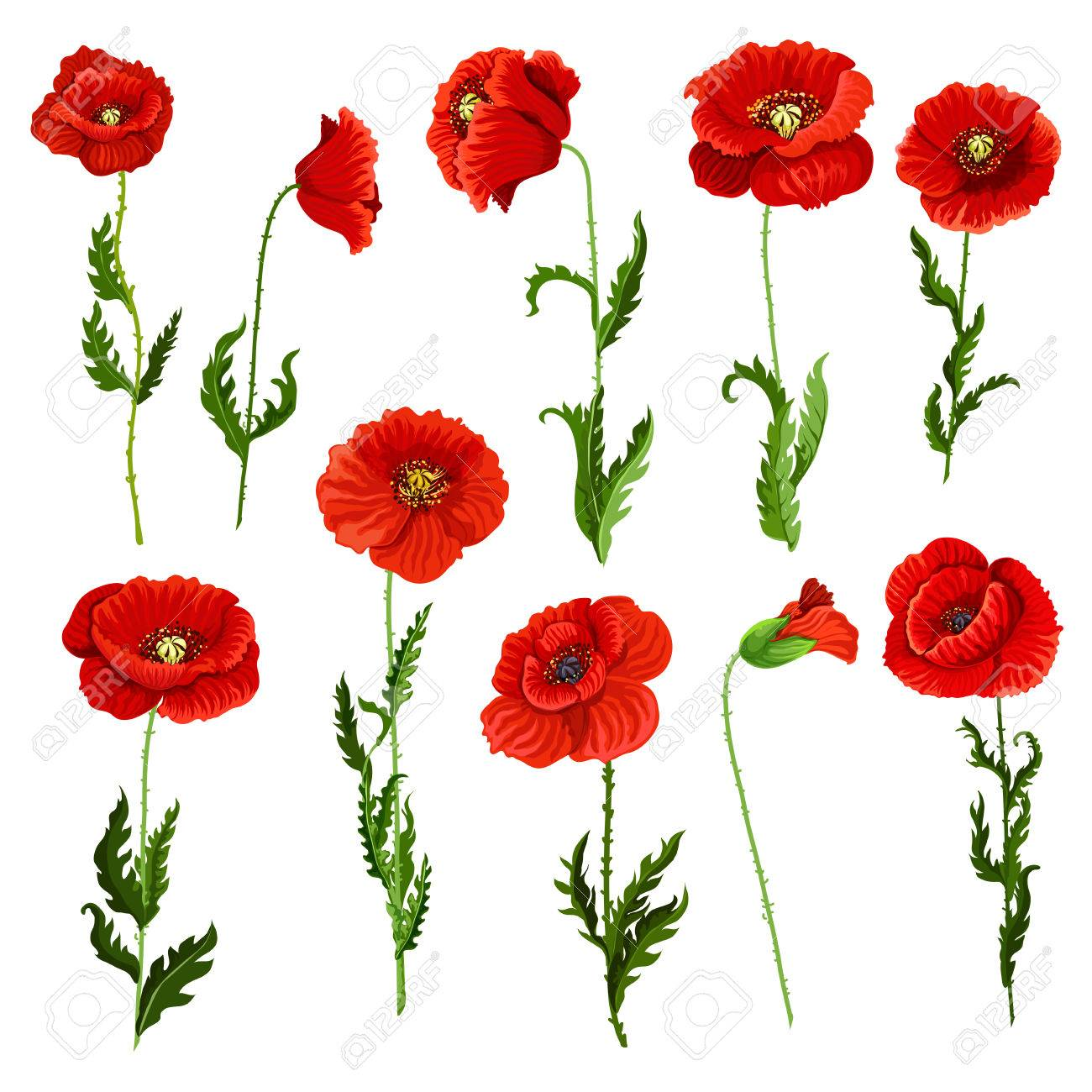 Poppy Flowers Icons Set Vector Isolated Botanical Symbols Of