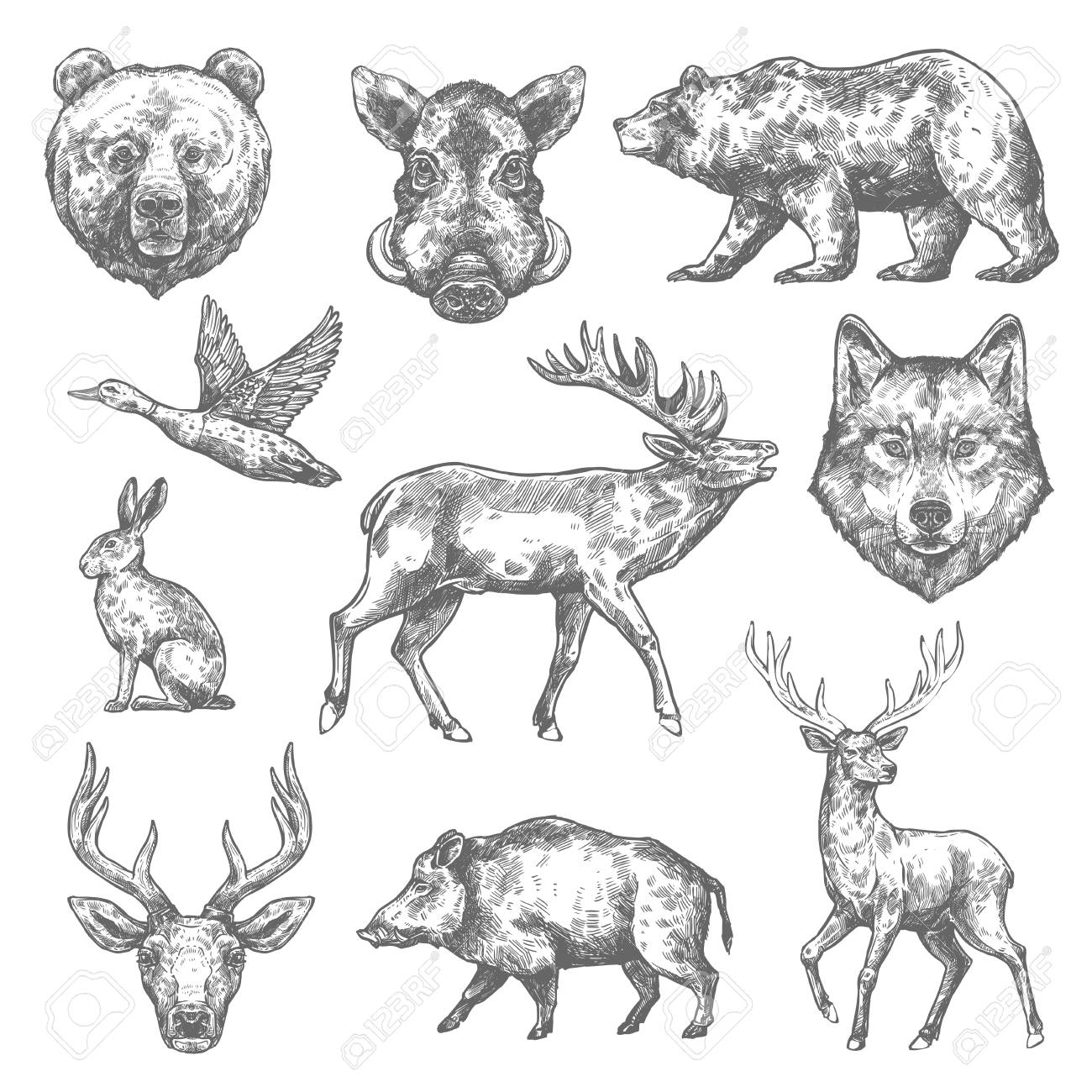 Vector Sketch Wild Animal Icons For Hunting Or Zoo Royalty Free Cliparts,  Vectors, And Stock Illustration. Image 95465109.