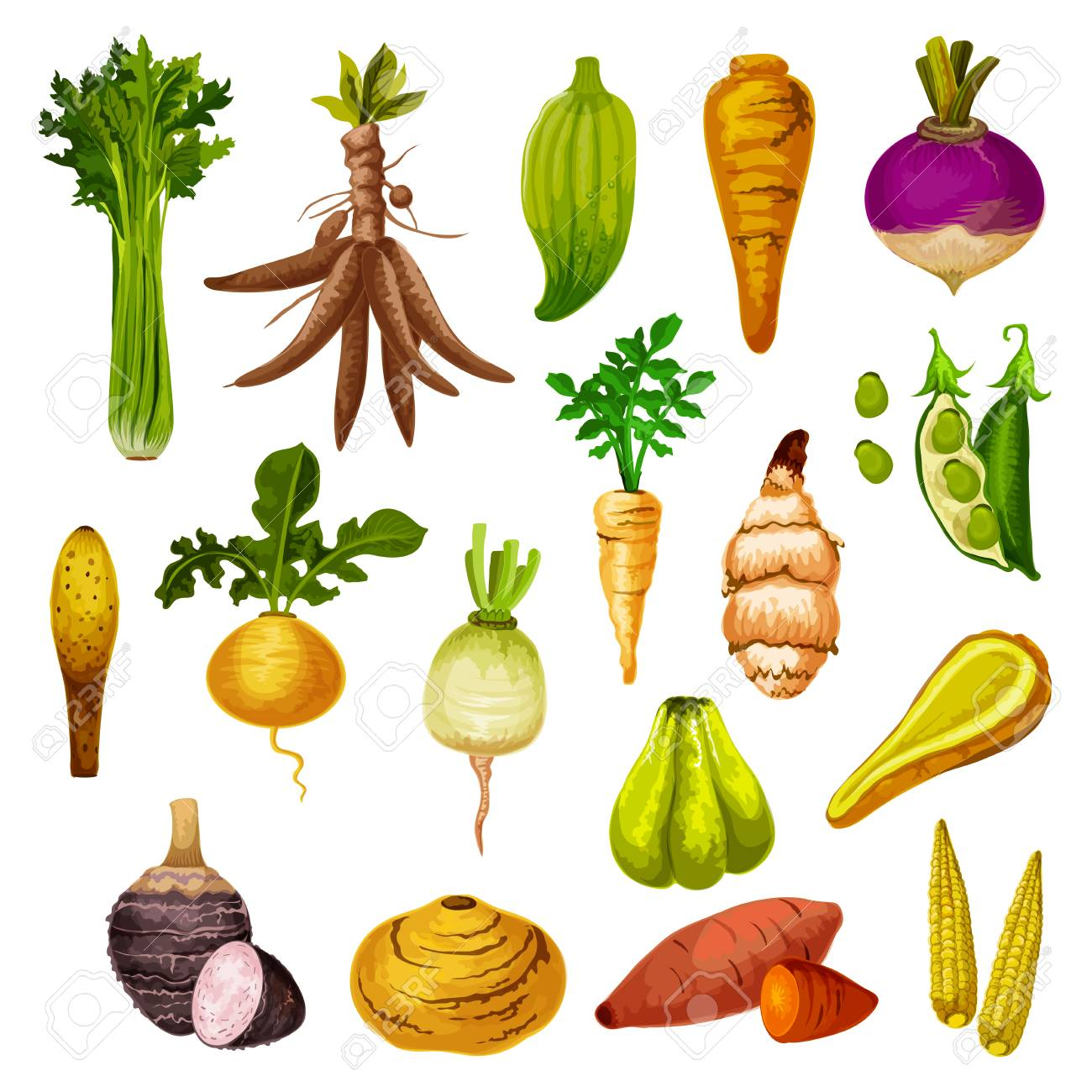 Root vegetables or veggie tuber icons. Vector sweet potato, radish or turnip and legume bread beans, natural jicama and cassava, manioc or celery and rutabaga, caigua and yam, little corn - 127635283
