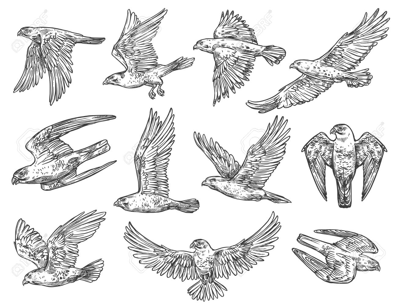 Eagle, hawk and falcon sketches with flying birds of prey. - 113538587