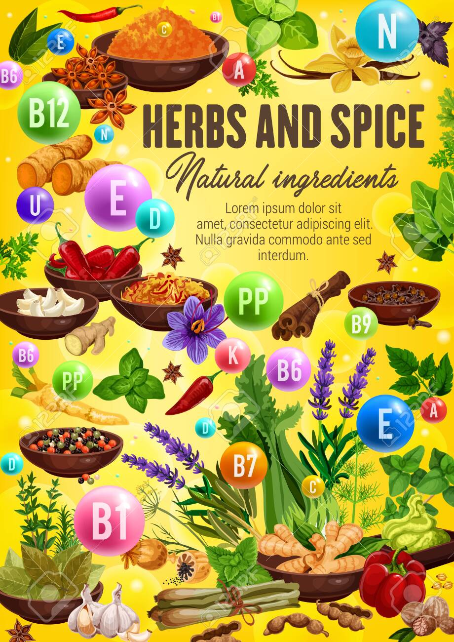Vitamins and minerals in spices and herbs  Vector chili pepper,