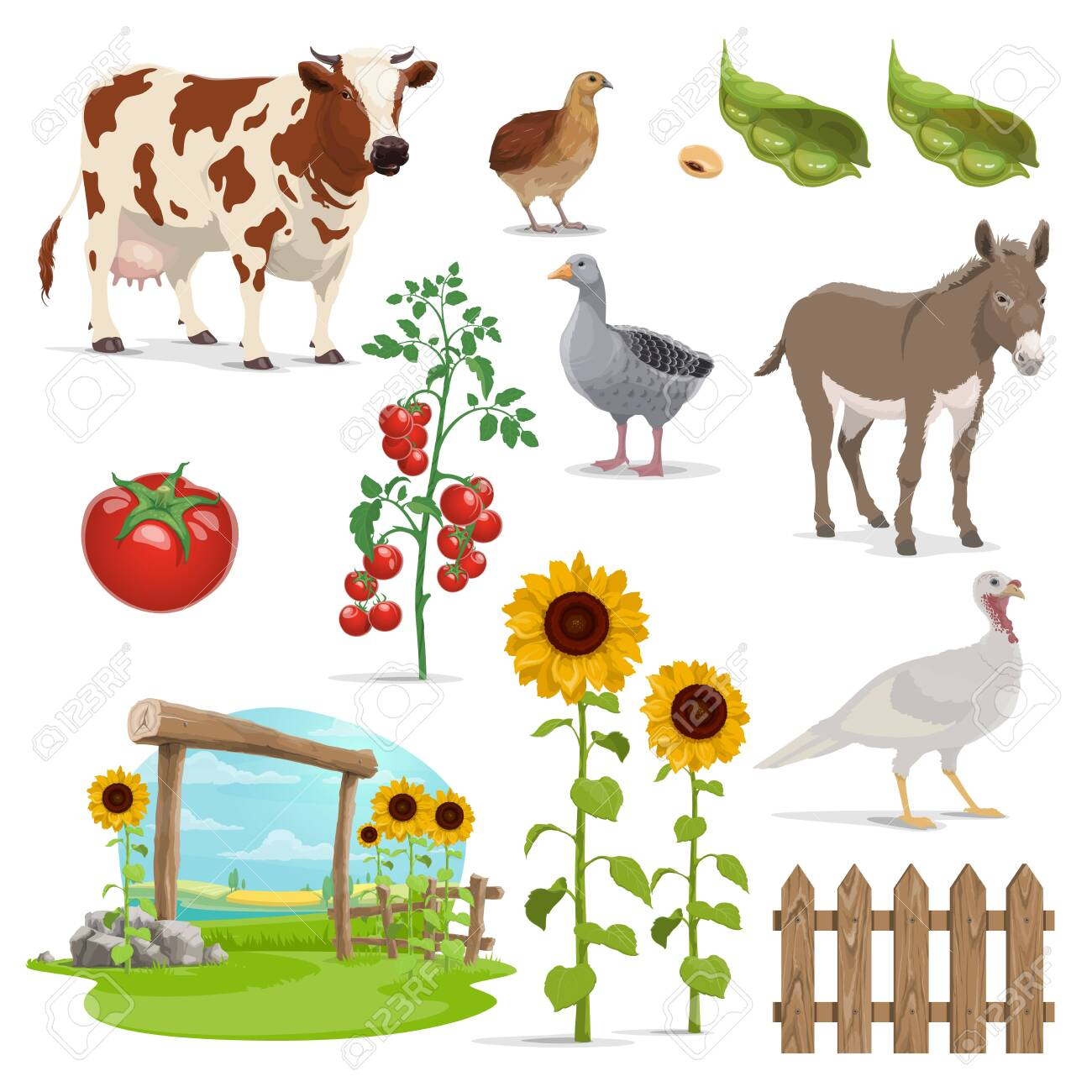 Farm And Agriculture Vector Field Animals Vegetable Food And Crop Plants Farmer Field Milk Cow And Village Nature Bean Grains Tomatoes Sunflowers And Fence Goose Turkey Quail And Donkey Royalty Free Cliparts