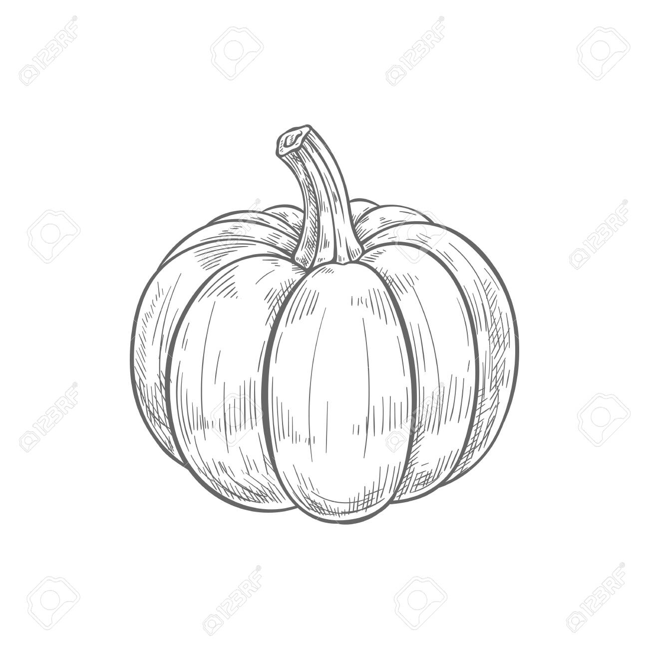 Pumpkin With Stem Isolated Raw Gourd Squash Monochrome Sketch Royalty Free Cliparts Vectors And Stock Illustration Image 144445555