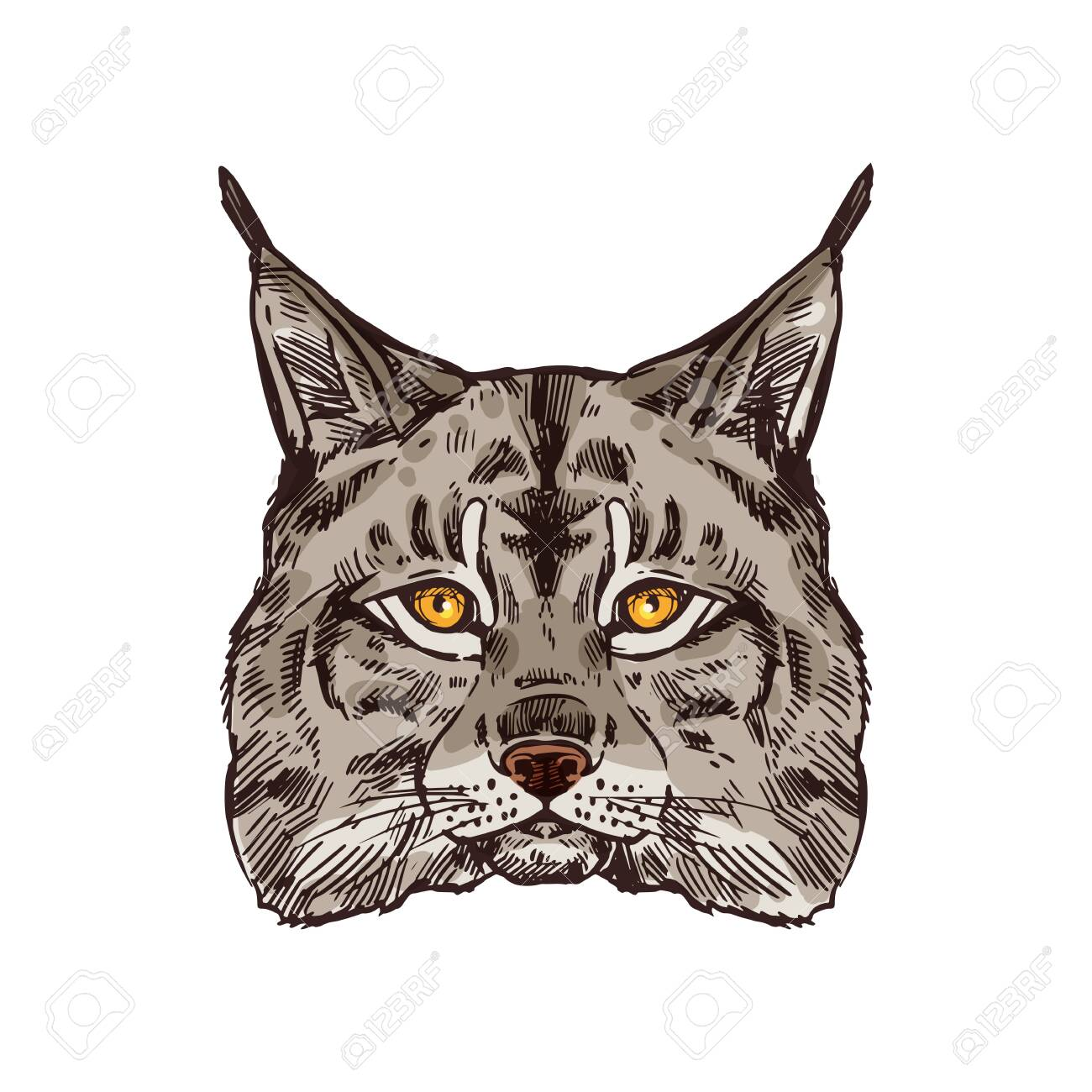 Lynx animal for hunting sport open season. Wild or bobcat predator head isolated icon, wildcat with gray fur and black tufts on ears for zoo mascot, hunter club or hunting camp design - 144393709