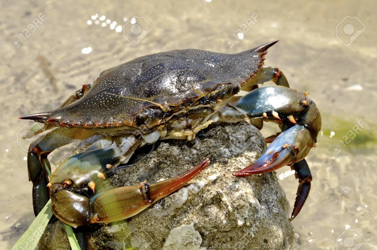 A closeup of a crab on a beach. Stock Photo - 9632811