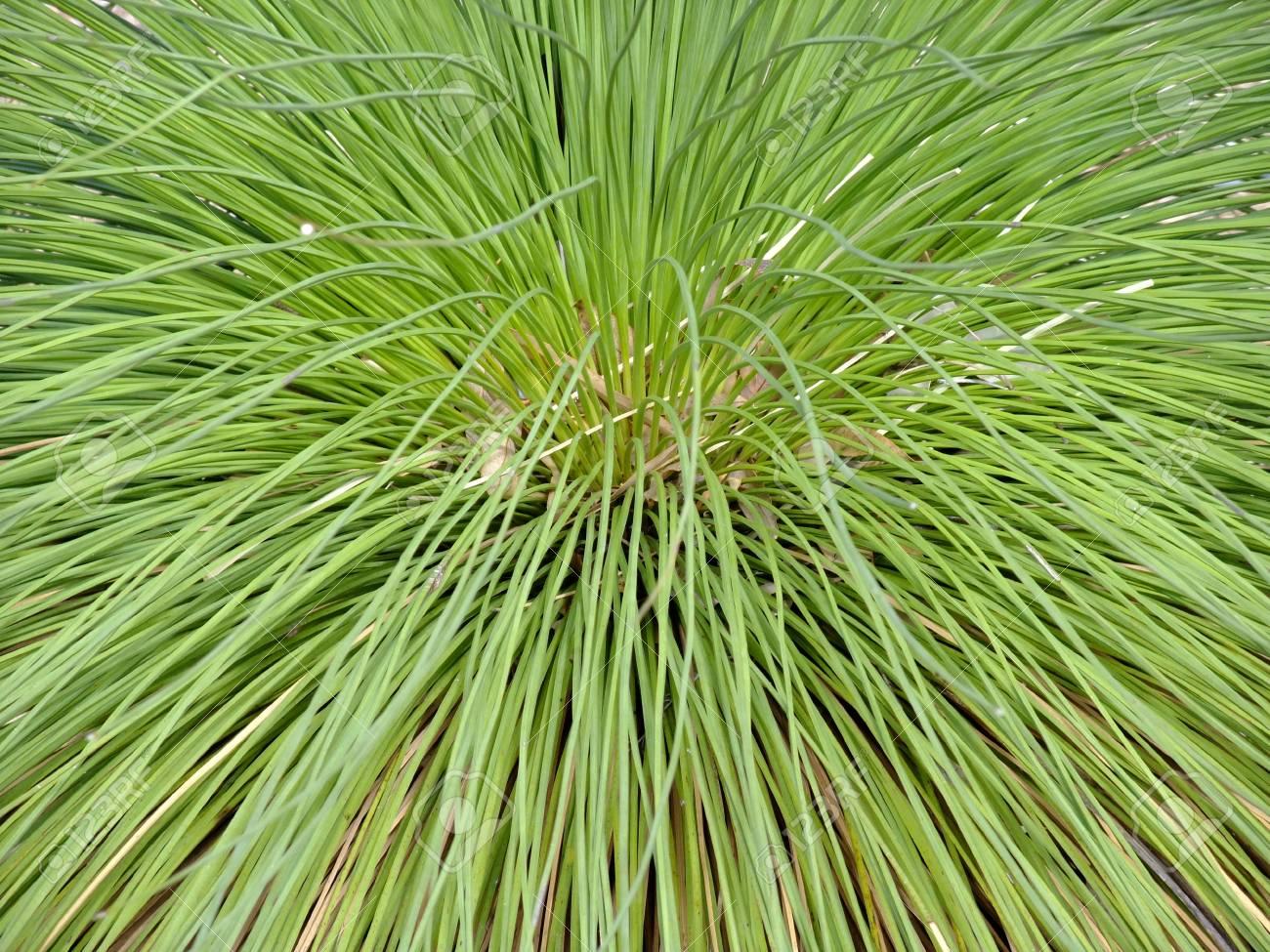 Plante Australienne Exterieur