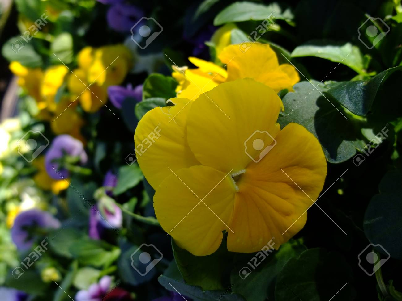 The most beautiful flower plants in western australia street stock stock photo the most beautiful flower plants in western australia street izmirmasajfo