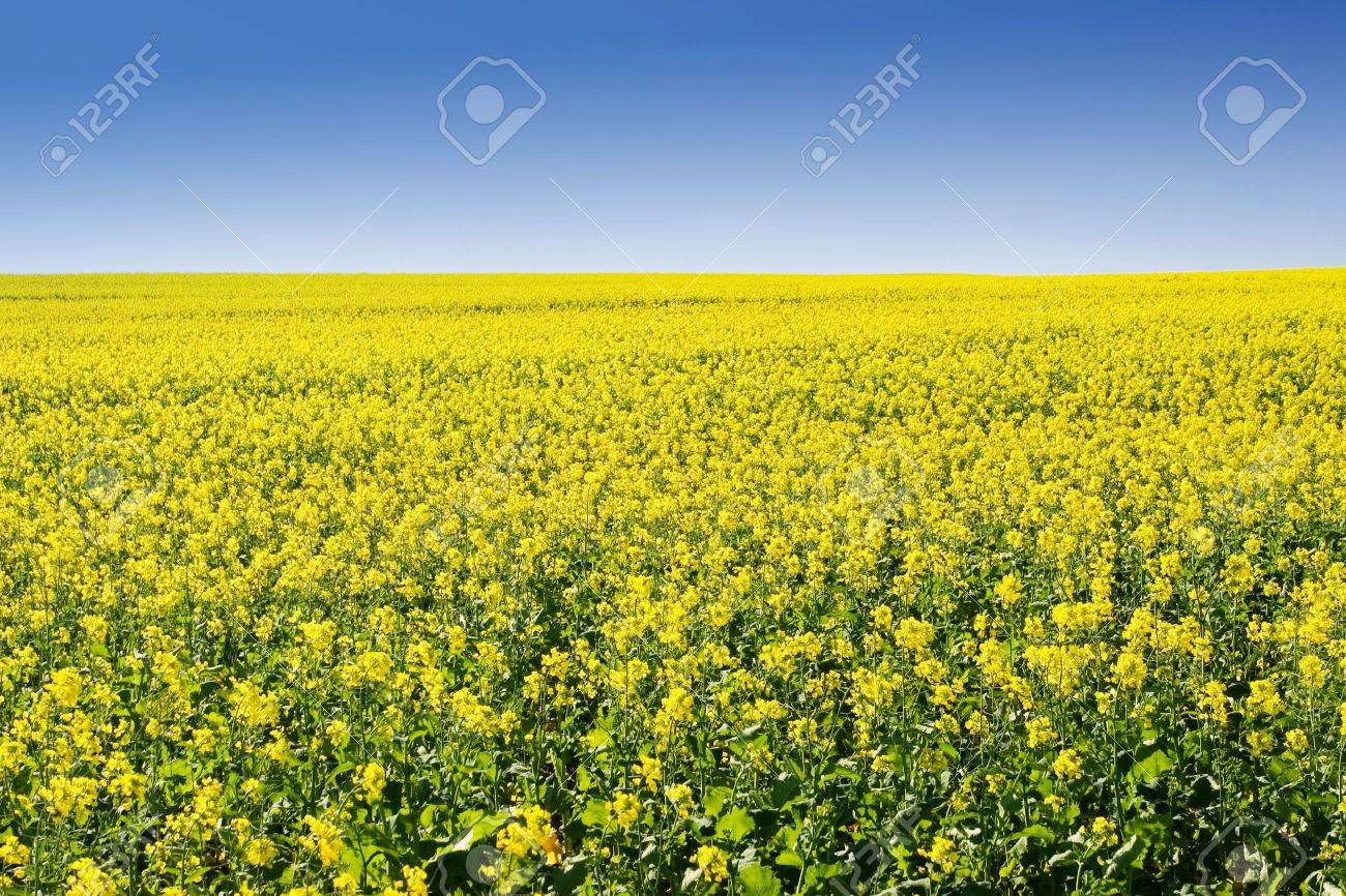Field of Flowers - Western Cape, South Africa Stock Photo - 236484