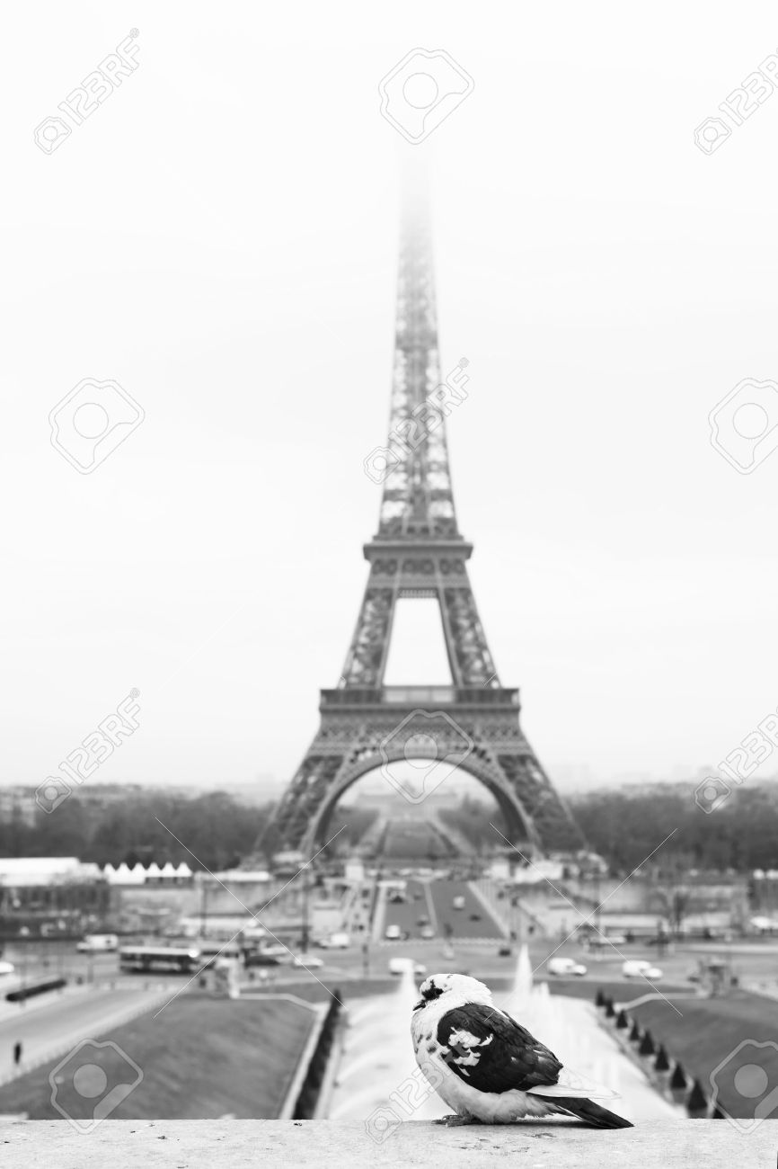 A bird sitting on a wall with the Eiffel Tower in Paris in the background. Black and white.  Copy space. Stock Photo - 488166