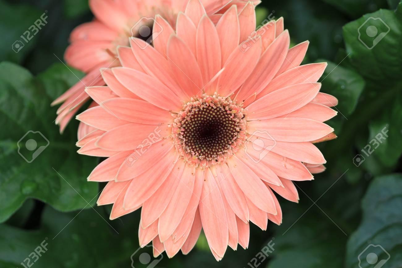 Daisy Stock Photo - 10584570