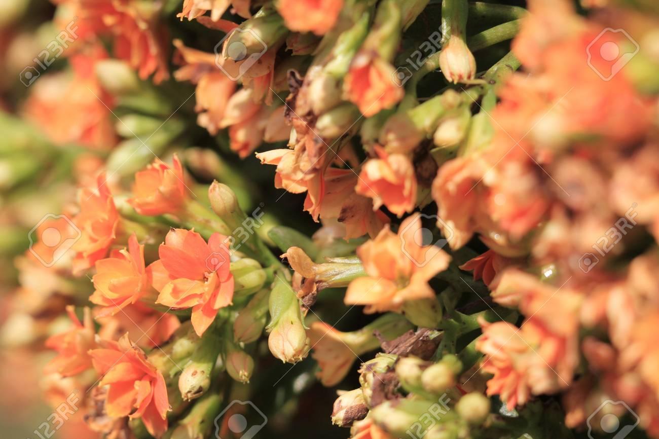 orange flower Stock Photo - 13326746