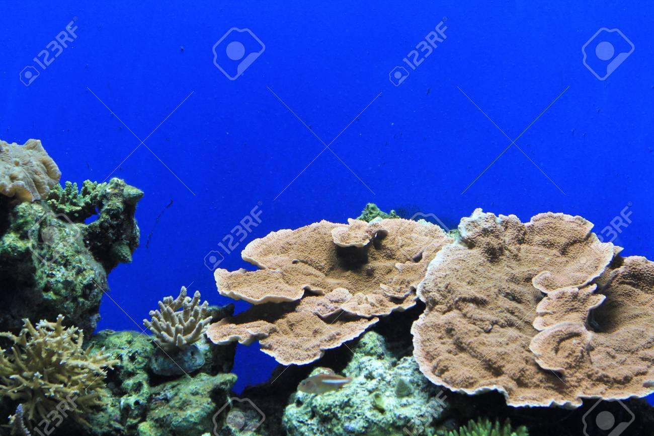 Coral In Aquarium Stock Photo - 21068699