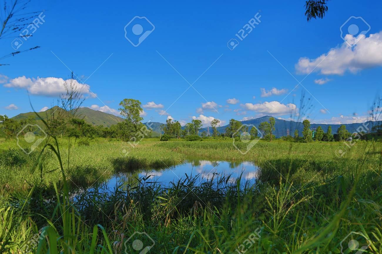 wetland Stock Photo - 15068208